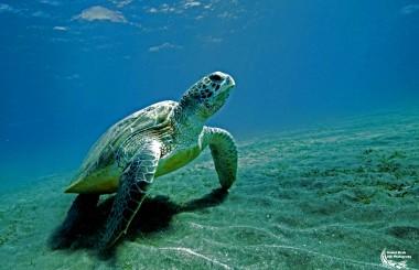 Daniel Strub, underwater photographer